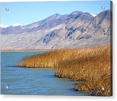 Lake Reeds Acrylic Print
