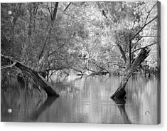 Lake Reflections Acrylic Print by Misty Stach