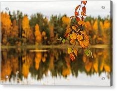 Lake Reflections Of Fall Foliage  Acrylic Print by Aldona Pivoriene