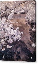 Lake Shadows Acrylic Print
