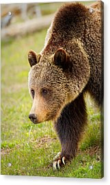 Acrylic Print featuring the photograph Lake Grizzly by Aaron Whittemore