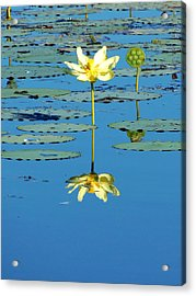 Lake Thomas Water Lily Acrylic Print
