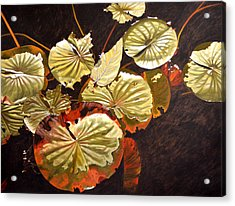 Lake Washington Lily Pad 11 Acrylic Print