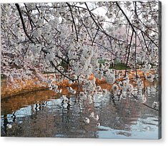 Acrylic Print featuring the photograph Lakeside by Yue Wang