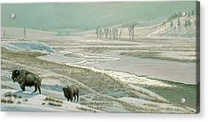 Lamar Valley - Bison Acrylic Print by Paul Krapf