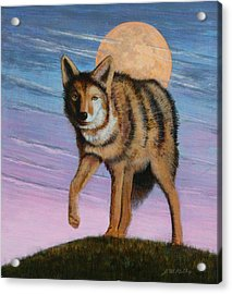 Lame Coyote Acrylic Print by J W Kelly