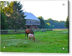 Lancaster County Farm Acrylic Print by Bill Cannon
