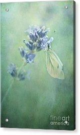 Land Of Milk And Honey Acrylic Print by Priska Wettstein