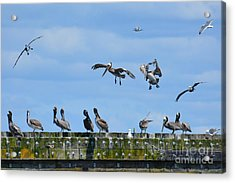 Landing Gear Down Acrylic Print by Gayle Swigart
