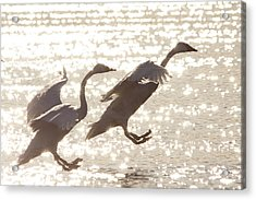 Acrylic Print featuring the photograph Landing by Inge Riis McDonald