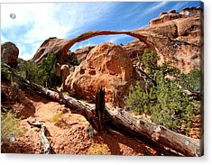 Landscape Arch Acrylic Print by Darryl Wilkinson
