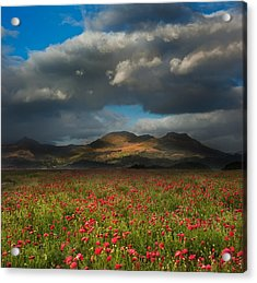 Landscape Of Poppy Fields In Front Of Mountain Range With Dramat Acrylic Print by Matthew Gibson