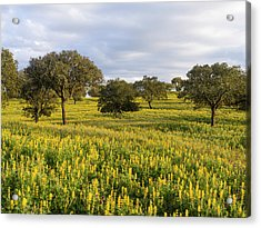 Landscape With Wildflower Meadow Acrylic Print
