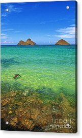 Lanikai Beach Sea Turtle Acrylic Print