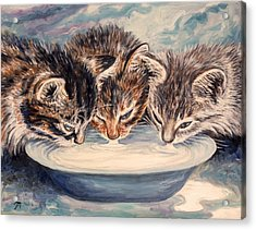 Lap Of Luxury Kittens Acrylic Print by Linda Mears