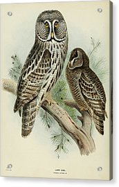 Lapp Owl Acrylic Print