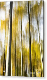 Larch In Abstract Acrylic Print by Anne Gilbert