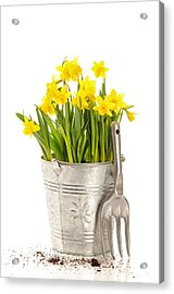 Large Bucket Of Daffodils Acrylic Print by Amanda Elwell