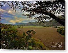 Large Cornfield In Valley Acrylic Print by Dan Friend