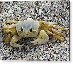 Acrylic Print featuring the photograph Ghost Crab by Cynthia Guinn