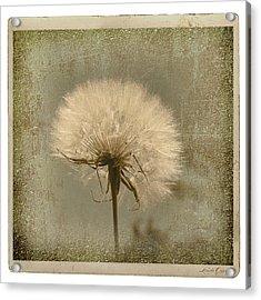 Large Dandelion Acrylic Print by Linda Olsen