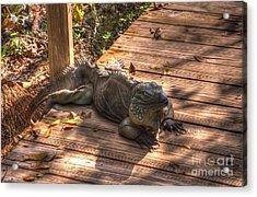 Large Iguana Acrylic Print by Dan Friend