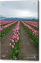 Large Pink Tulip Field Acrylic Print by Valerie Garner