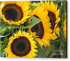 Acrylic Print featuring the photograph Large Sunflowers by Chrisann Ellis