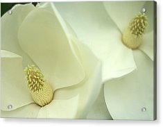 Acrylic Print featuring the photograph Large White Magnolias by Suzanne Powers