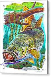 Largemouth Bass Acrylic Print by Carey Chen