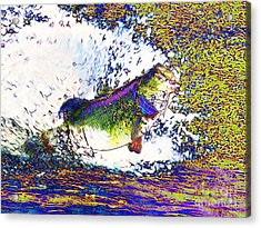 Largemouth Bass P68 Acrylic Print by Wingsdomain Art and Photography