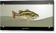 Largemouth Bass Acrylic Print by Serge Averbukh