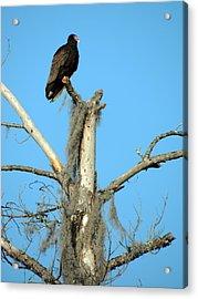 Larry Buzzard Vulture Acrylic Print