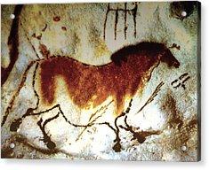 Lascaux Horse - Version 2 Acrylic Print by Asok Mukhopadhyay