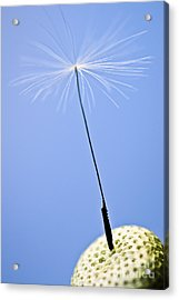 Last Dandelion Seed Acrylic Print by Elena Elisseeva