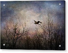 Last Delivery Of The Day Acrylic Print