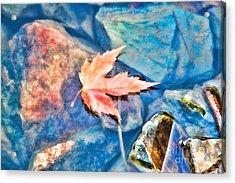 Last Fall  Acrylic Print by Cathy  Beharriell