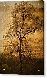 Last Fall Acrylic Print by Lena Wilhite