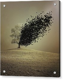 Last Hope Acrylic Print by Radin Badrnia