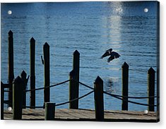 Last Light Flight Acrylic Print by Susan Molnar