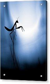 Last Night On Earth Acrylic Print by Fabien Bravin