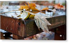 Acrylic Print featuring the photograph Last Of The Leaves by Gwyn Newcombe
