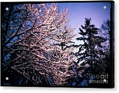 Last Peek Of Winter Sun Acrylic Print