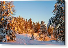 Last Rays Of Light In The Winter Forest Acrylic Print