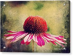 Last Summer Feeling Acrylic Print by Angela Doelling AD DESIGN Photo and PhotoArt