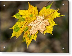 Last Support - Featured 3 Acrylic Print by Alexander Senin