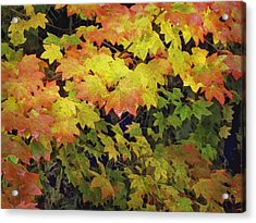 Last Year's Autumn Leaves Acrylic Print by Philip White