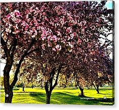 Late Afternoon At Lake Park Acrylic Print