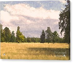 Late Afternoon Wheatfield  Acrylic Print by Pixel  Chimp