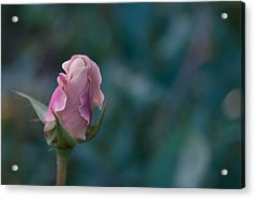Late Bloom Acrylic Print